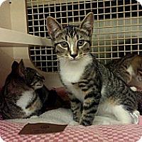 Adopt A Pet :: Dalia - Stafford, VA