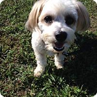 Adopt A Pet :: OLLIE - W. Warwick, RI