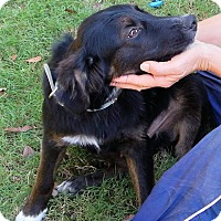 Adopt A Pet :: *Jackson - PENDING - Westport, CT