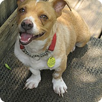 Adopt A Pet :: Truvie - Lincolndale, NY