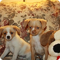 Adopt A Pet :: 2 (M) Angie's Babies ( - California City, CA