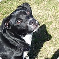 Adopt A Pet :: Cyndee - Marlton, NJ