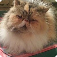 Adopt A Pet :: CeCe - Columbus, OH