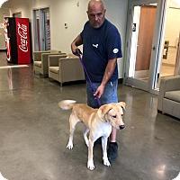 Adopt A Pet :: Banks in CT - East Hartford, CT