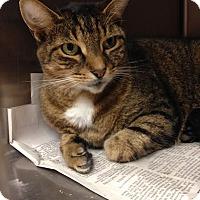 Adopt A Pet :: Smokey - East Brunswick, NJ