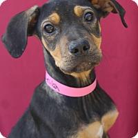 Adopt A Pet :: Delilah - Waldorf, MD
