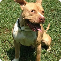 Adopt A Pet :: Dudley - Atlanta, GA