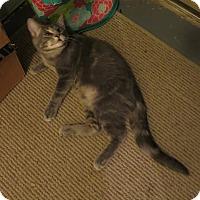 Adopt A Pet :: Kodiak - Geneseo, IL