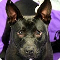 Adopt A Pet :: Sally - Huntley, IL
