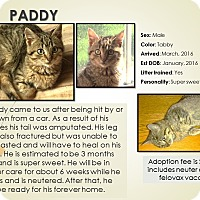 Adopt A Pet :: Paddy - Mount Gilead, OH