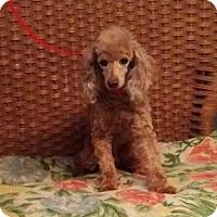 Adopt A Pet :: Crimson - Tulsa, OK