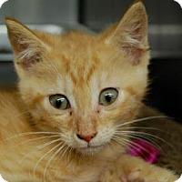Adopt A Pet :: Rasta - Bradenton, FL
