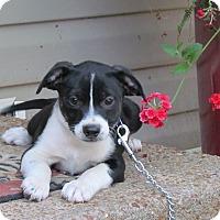 Adopt A Pet :: MALONE - Hartford, CT