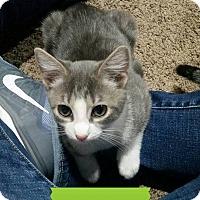Adopt A Pet :: Daisy - Colmar, PA