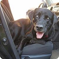 Adopt A Pet :: Jake - Pataskala, OH