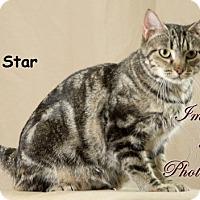 Adopt A Pet :: Star - Oklahoma City, OK