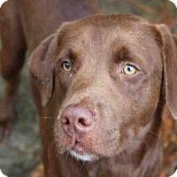 Adopt A Pet :: JUMANJI - Fort Walton Beach, FL