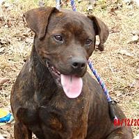 Adopt A Pet :: Lola (55 lb) Loving Sweetie! - Burlington, VT