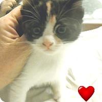 Adopt A Pet :: Phyllis - Pensacola, FL