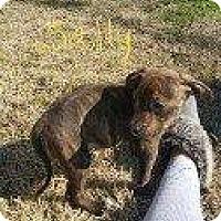 Adopt A Pet :: SALLY - Hampton, VA