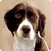 Adopt A Pet :: Brinkley - Minneapolis, MN