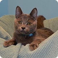 Adopt A Pet :: Countdown - Cincinnati, OH