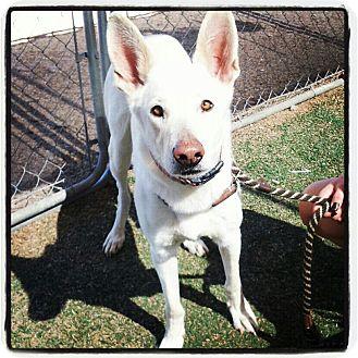 German Shepherd Dog Mix Dog for adoption in Scottsdale, Arizona - Yeti
