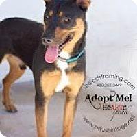 Adopt A Pet :: CASSIDY - Phoenix, AZ