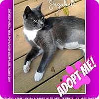 Adopt A Pet :: JEZZABELL - Bluff city, TN
