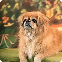 Adopt A Pet :: Paris - Portland, ME