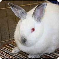 Adopt A Pet :: Natalya - Williston, FL