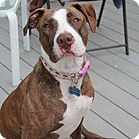 Adopt A Pet :: Sherri - Trenton, NJ