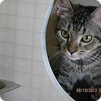 Adopt A Pet :: Pursuit - West Dundee, IL