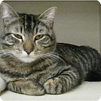 Adopt A Pet :: Church - Mesa, AZ