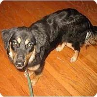 Adopt A Pet :: McKenna - Orlando, FL