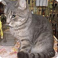 Adopt A Pet :: Dante - Riverside, RI