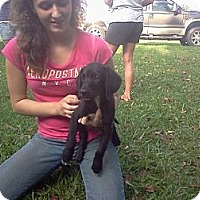 Adopt A Pet :: Clayton - West Bridgewater, MA