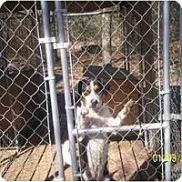 Adopt A Pet :: Moo Cow - HOBOKEN, GA