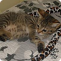 Adopt A Pet :: Peeta - Sunderland, ON