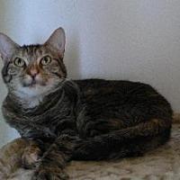 Adopt A Pet :: Tessie - Alvin, TX