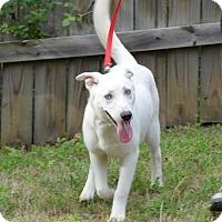 Adopt A Pet :: Danica - Jackson, TN