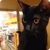 Adopt A Pet :: Sal - Scottsdale, AZ