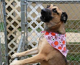 German Shepherd Dog Dog for adoption in Rossville, Tennessee - McGruff