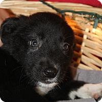 Adopt A Pet :: Paprika - Waldorf, MD