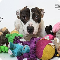 Adopt A Pet :: Hercules - Baton Rouge, LA