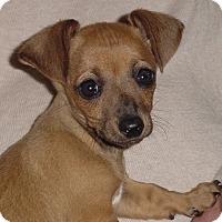 Adopt A Pet :: Zoey and Gidget - Bellflower, CA