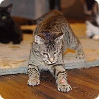 Adopt A Pet :: Thai - Homewood, AL