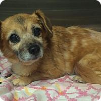 Adopt A Pet :: Alexis - Oak Ridge, NJ