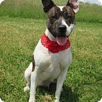 Adopt A Pet :: NIKITA - New Cumberland, WV