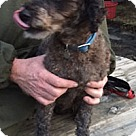 Adopt A Pet :: Pierre